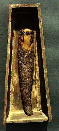 Falcon Mummy in Coffin