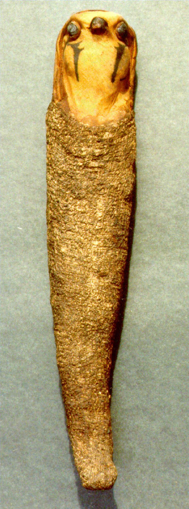 Falcon Mummy