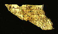 Arabic manuscript written on parchment.
