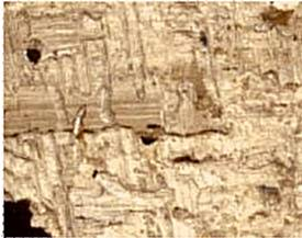 Mummy cartonnage fragment showing insect damage to the papyrus backing.